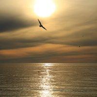 Альбатрос на закате :: valeriy khlopunov