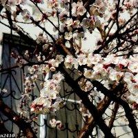 Ростовская весна :: Нина Бутко