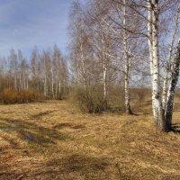 Весенний пейзаж :: Константин