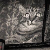 Булгаковский кот... воспоминания о былых временах :: Фотограф Андрей Журавлев