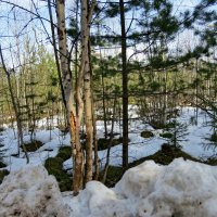 Последний снег :: Светлана