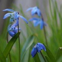 Весна. Цветы :: Gal` ka