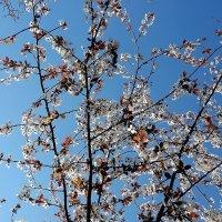 Звездная весна :: Валерий Розенталь