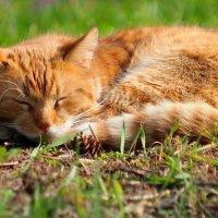 сон на мартовской траве :: Александр Прокудин