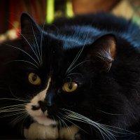 Городская жизнь кота Валета :: Оксана Галлямова