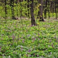 весенний лес :: юрий иванов