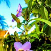 цветочек на дереве :: Екатерина Самохина