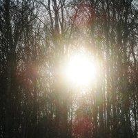 Солнечные блики :: Наталья Петровна Власова