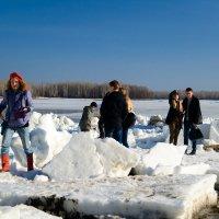Пингвины на льдине :: Сергей Черепанов