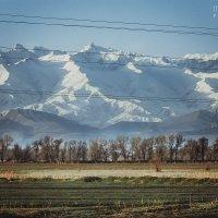 Манящие горы и золотые поля :: Маргарита Б.
