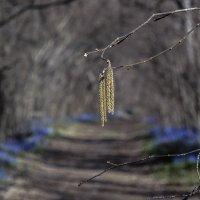 весна :: Геннадий Свистов