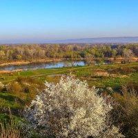 Весна на Кубани :: Бронислав Богачевский