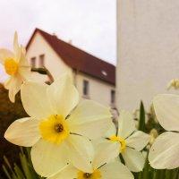 Весенний день :: Надежда