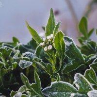 Весенние заморозки :: Маргарита Б.