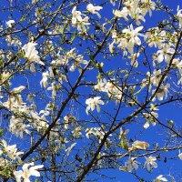 Небо цветет. :: Сергей Рубан