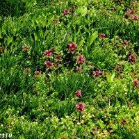 Апрельское разноцветье :: Нина Бутко