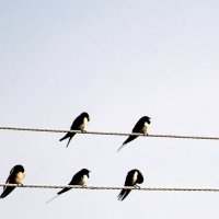ноты-птицы :: Валерий Самородов