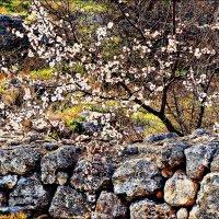 Весна и камни Херсонеса :: Кай-8 (Ярослав) Забелин