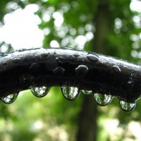 После дождя. :: Дмитрий Львович Чёткин