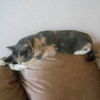 Отдыхаем на диване) :: Татьяна