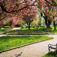Весенний парк :: Сергей Форос