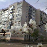 Весна в Украине! :: Миша Любчик