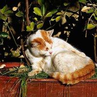 кошка, приученная к горшку :: Александр Корчемный