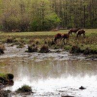 Пейзаж с оленями :: Alexander Andronik