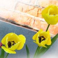 желтые тюльпаны :: Oksana Verkhoglyad