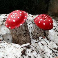 А вот и первые грибы-подснежники:) :: Андрей Заломленков