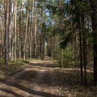 Весенний лес. :: Олег Козлов