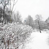 тропами летнего сада...весною о зиме в летнем... :: Михаил Жуковский