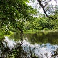 Лето на реке Лопасня. :: Владимир Безбородов