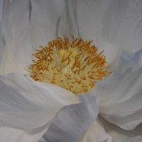flowers :: Naum