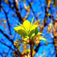 Весна идёт, весне дорогу... :: Владимир Драгунский
