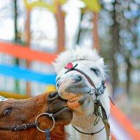 Поцелуй... :: Александр Кудров