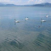 Лебединое озеро :: Tanja Gerster