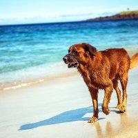 солёный пёс :: Александр