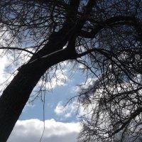 Взгляд на небо :: Svetlana Lyaxovich