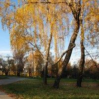 Осень в парке. :: Владимир Безбородов