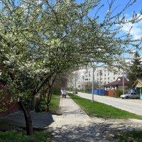 Весна на моей улице :: Татьяна Смоляниченко