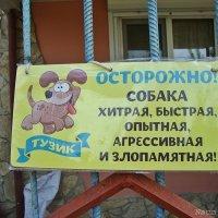 А собаки и нет вовсе :) :: Лидия (naum.lidiya)