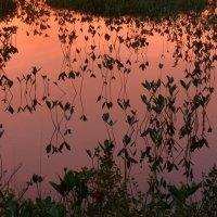 Фрагмент зеркального отражения красок северного неба :: Олег Гулли