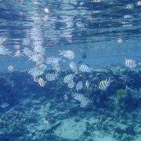 стайка рыбок :: Лариса Батурова