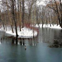 Один и на тонком льду... :: Sergey Gordoff