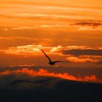 Чайка над Байкалом :: Юрий Николаев