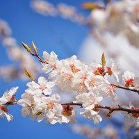 Весна :: Юлия Коноваленко (Останина)