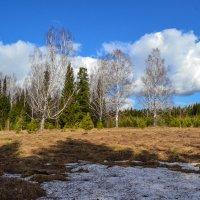 остатки снега :: сергей