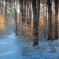 Лесной рассвет...4. :: Андрей Войцехов