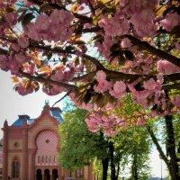 Весенний Ужгород :: Сергей Форос